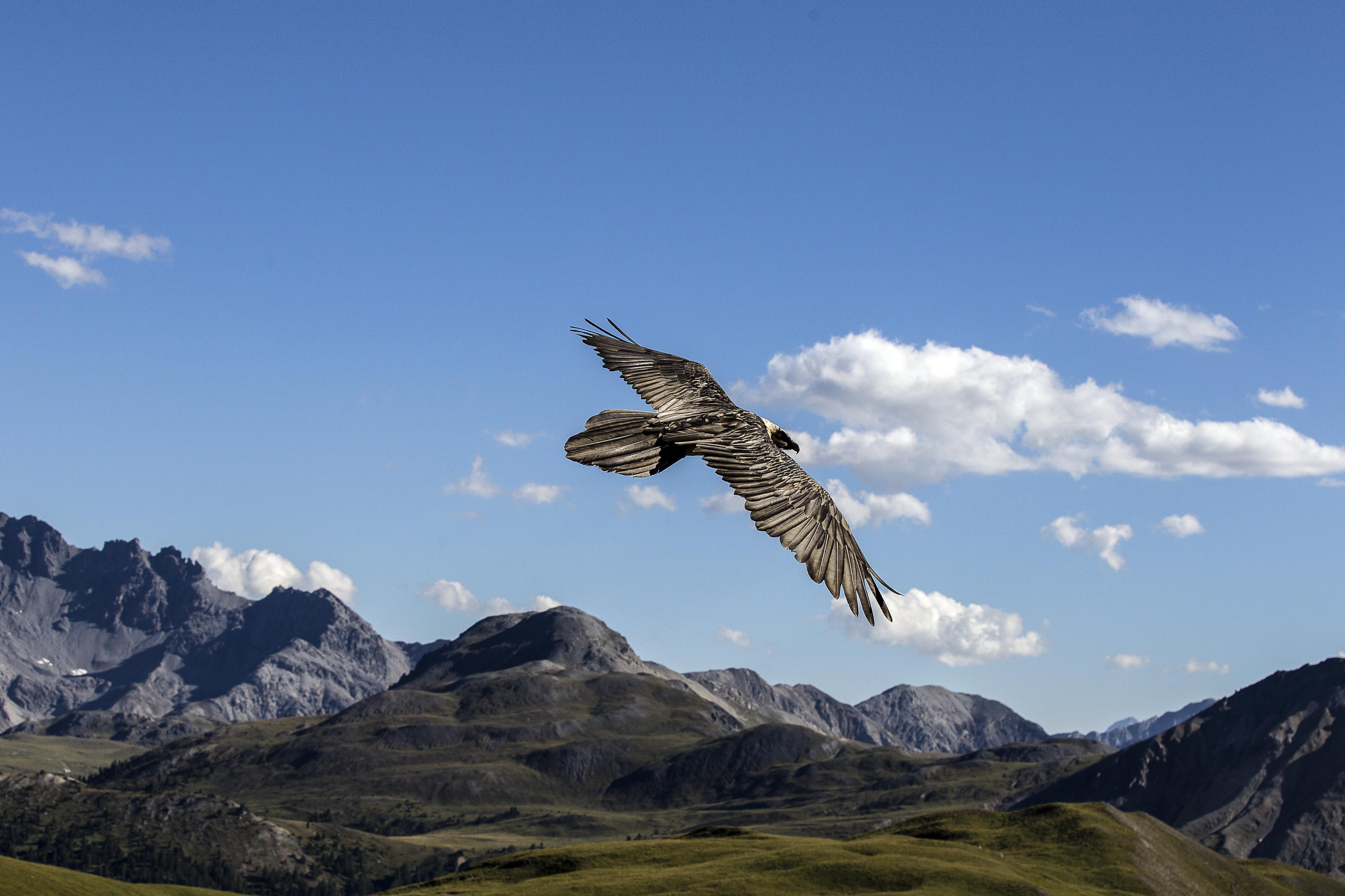 Ausschreibung Jubiläum Schweizerischer Nationalpark Slide 1