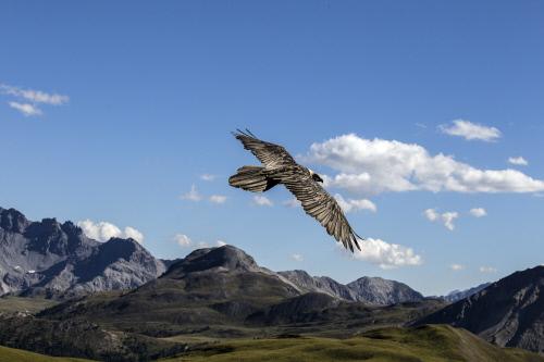 Schweizer Nationalpark Slide 1