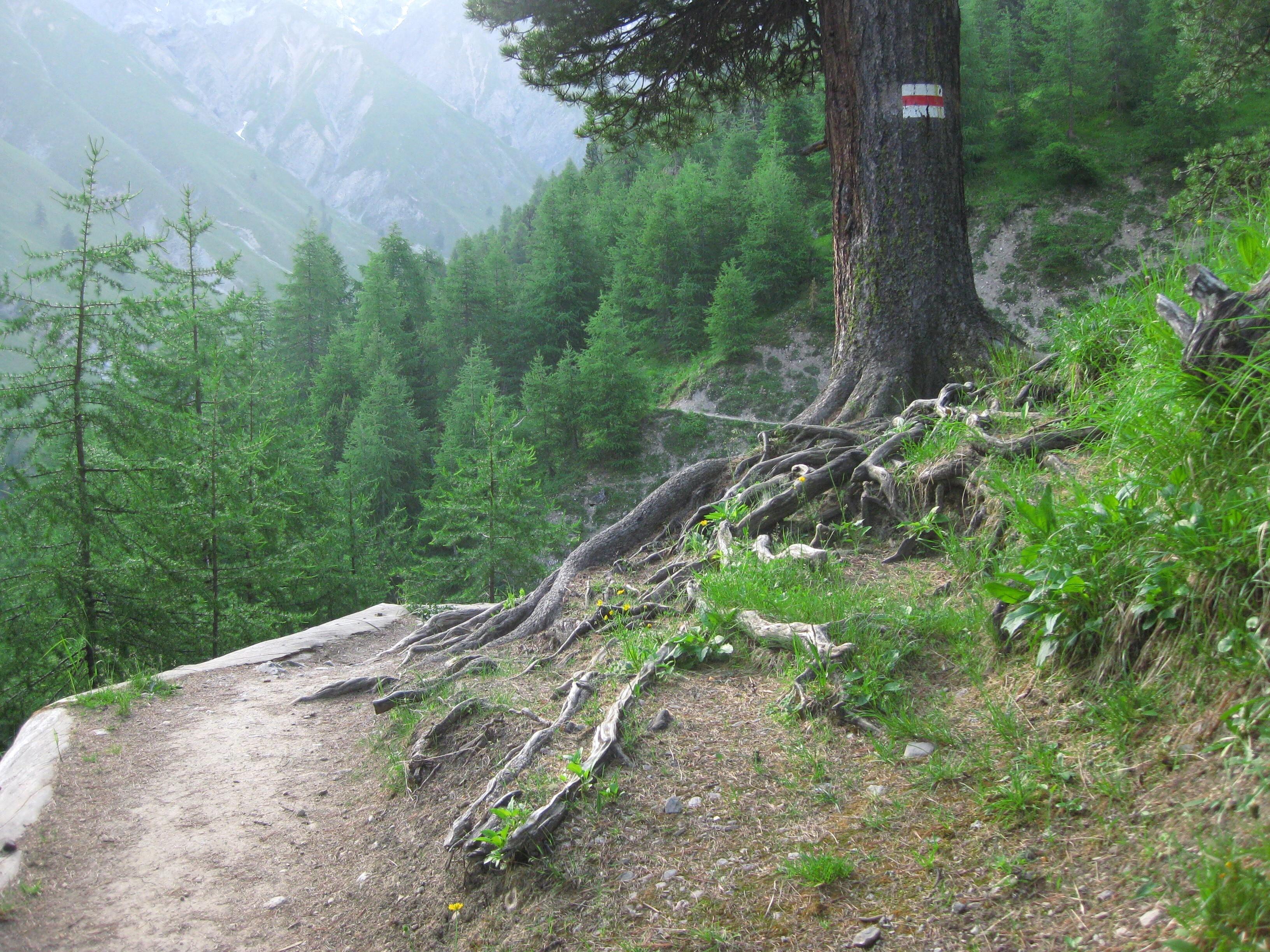 Schweizerischer Nationalpark Slide 2