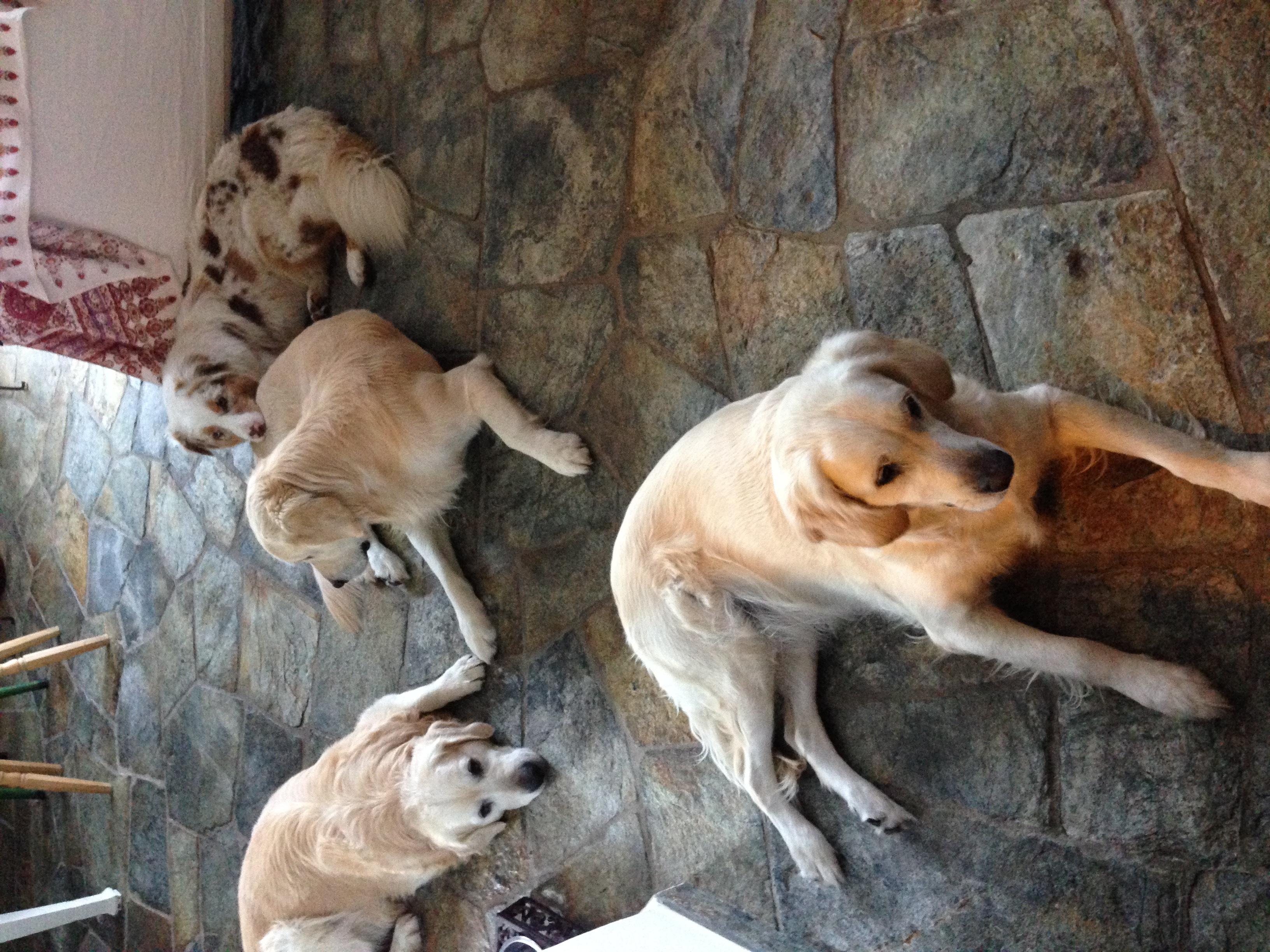 Hundebetreuung Engadin Slide 3