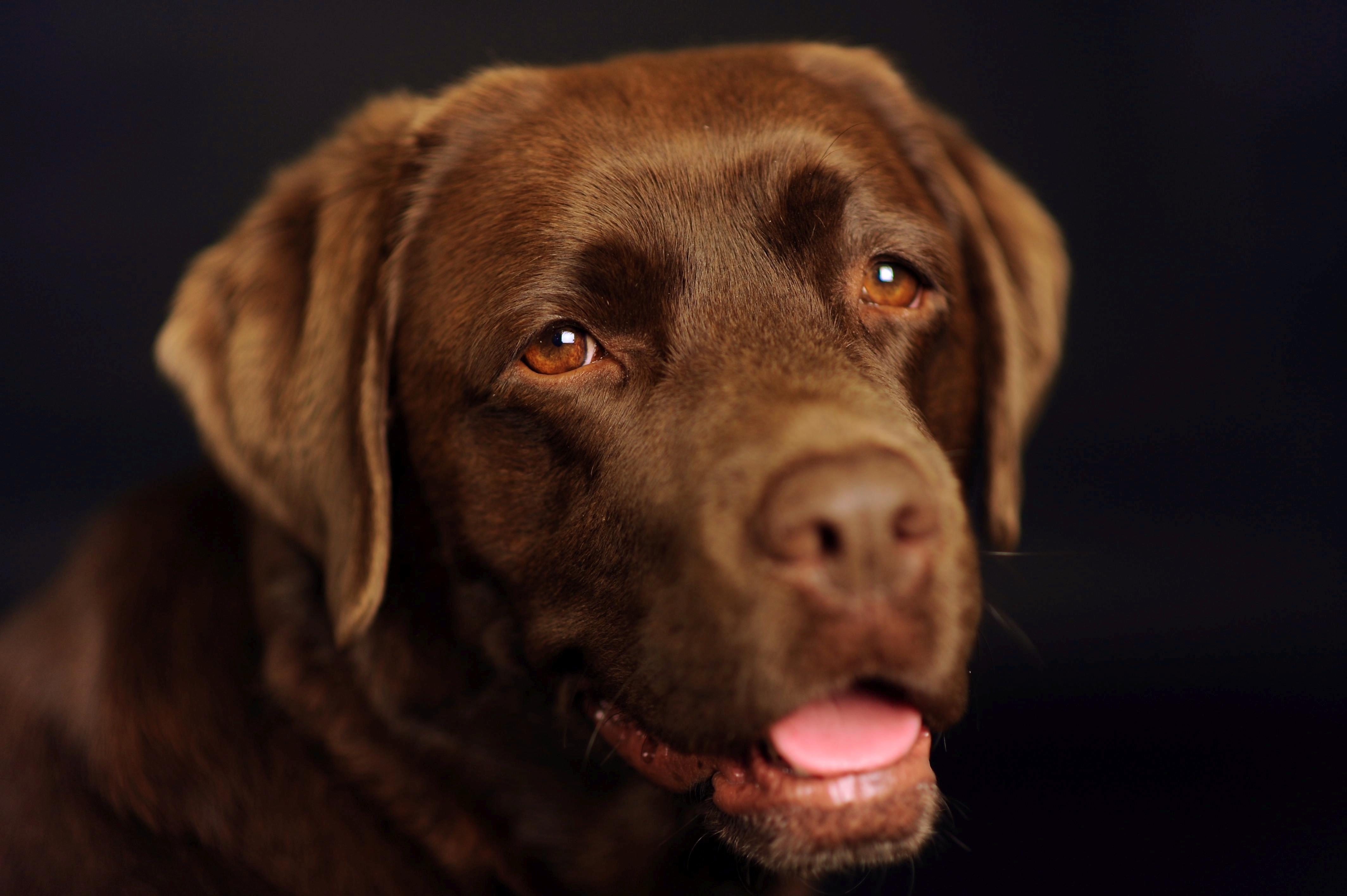 Palü Hundeschulung und Tierbetreuung Slide 1