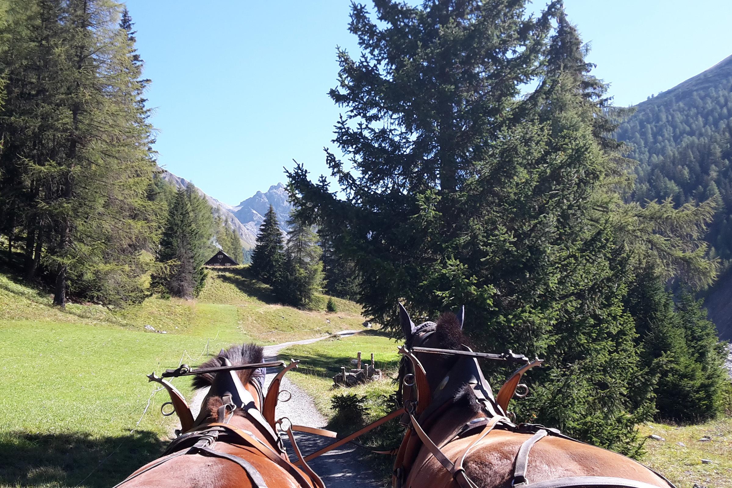 Kutschenfahrten in Zuoz
