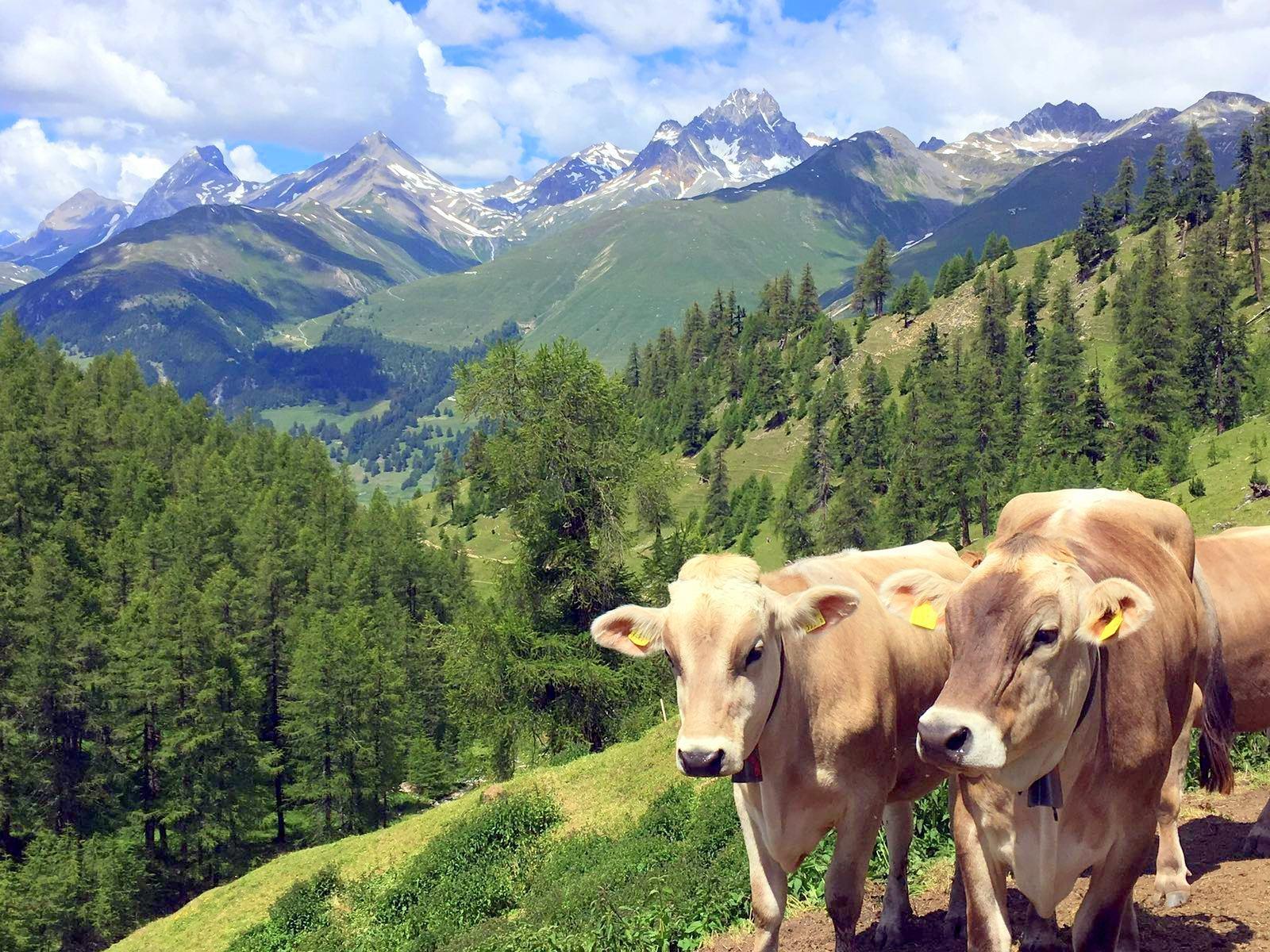Alp Arpiglia Slide 6