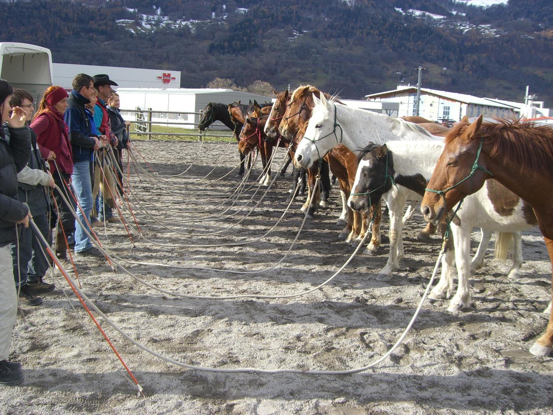 HETS die Schule für Natural Horsemanship Slide 1