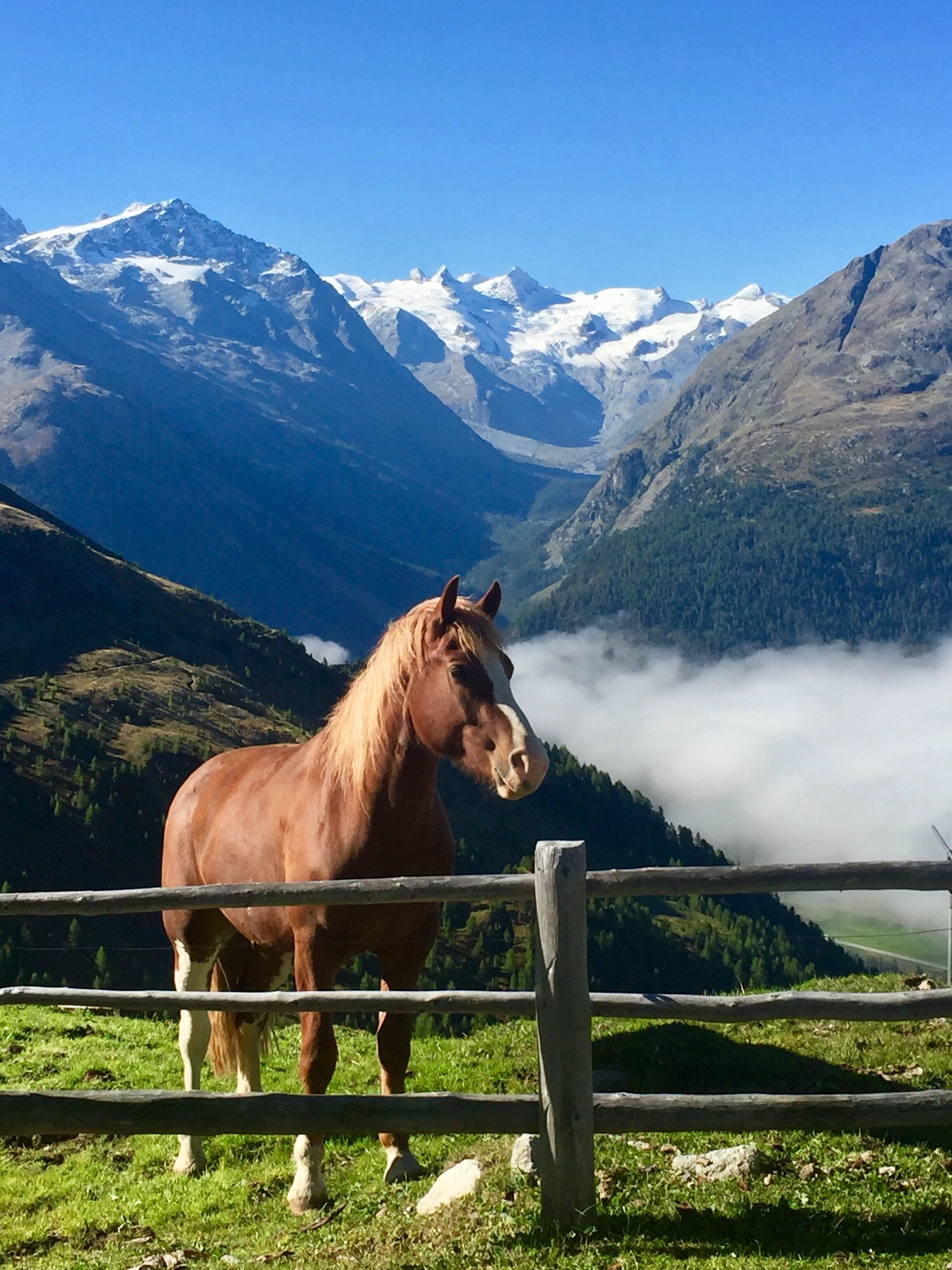 Alp Muottas / Tegia da Muottas Slide 1