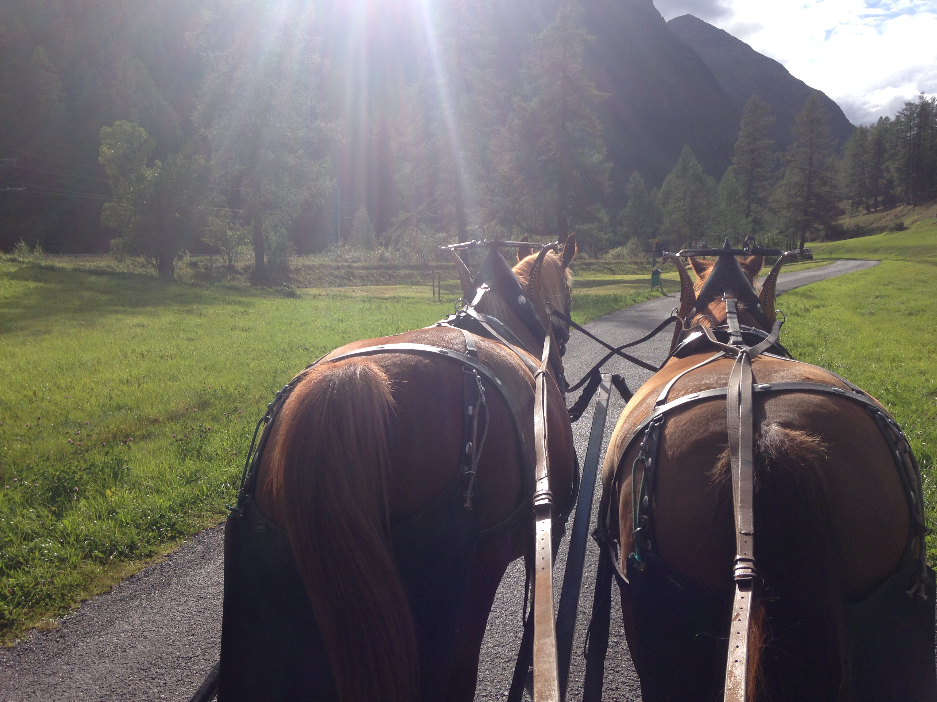 Horse-drawn carriage rides into the Val Bever/Spinas