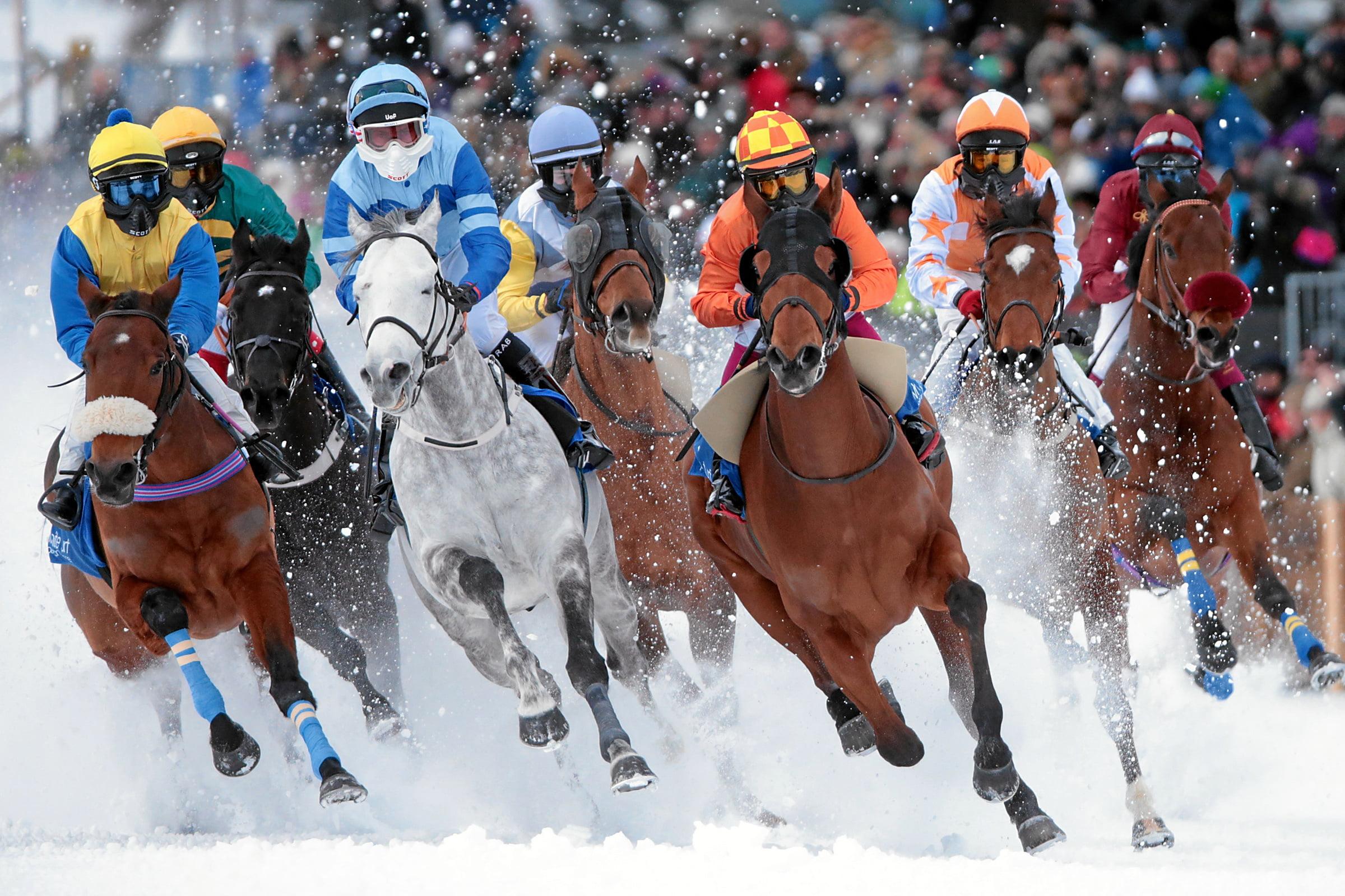 White Turf St. Moritz - International Horse Races on Snow since 1907