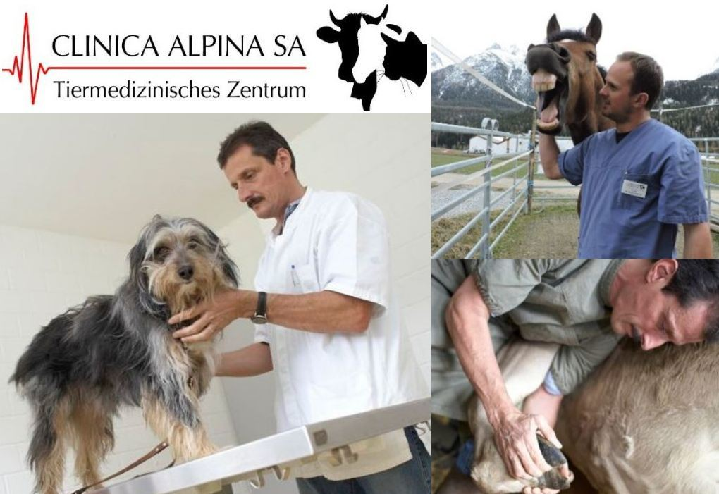 Clinica Alpina SA / Tierarzt Slide 1