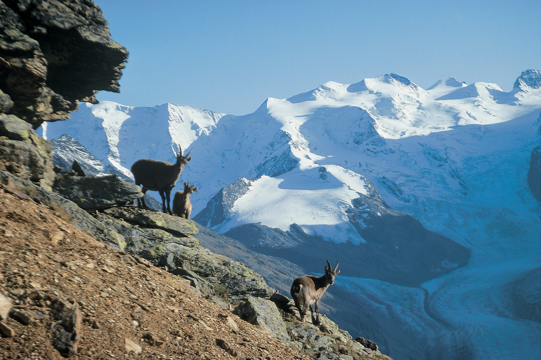 Marmot and Ibex Excursion