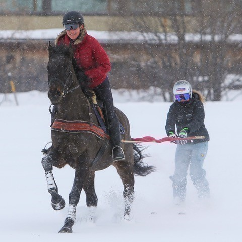 Skijoring - the unique experience for skiing and equestrian sports enthusiasts